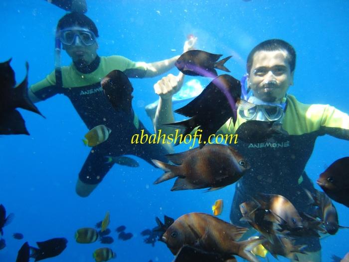 snorkeling di bunaken
